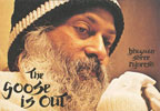 osho the goose is out